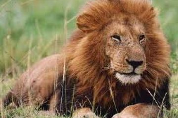 Online Forex Trading: Are You A Lion or a Cub?